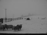 Snow to theSun